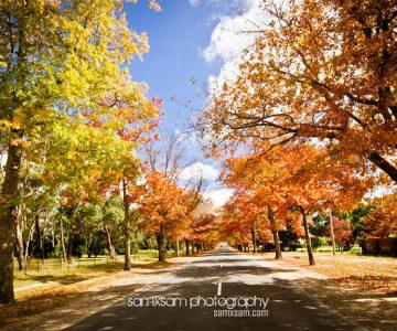 Mount Macedon 。Autumn