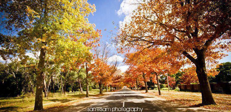 Mount Macedon 。Autumn