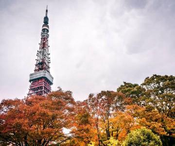 2013 JAPAN .019 Tokyo Tower, Harajuku, 明治神宫753