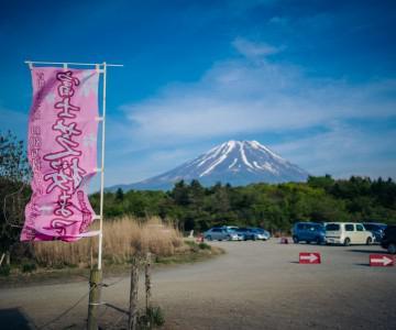 Japan Trip v2.0 Lake Saiko, Lake Motosu and Shiba Sakura Festival