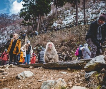 Japan Trip 5.0 - Snow Monkey Park
