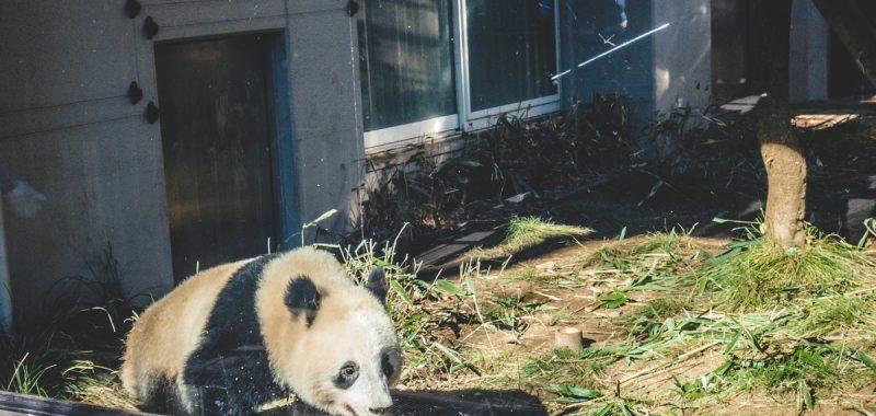 Japan Trip 5.0 - Ueno Zoo